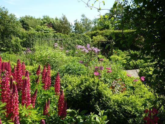Squinty garden 2014
