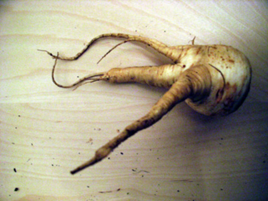 A parsnip called Octopussy