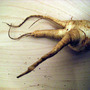 Parsnip4growsonyou