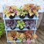 Plantstand1