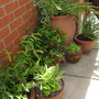 Side garden pots