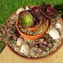 Succulent Pot (Aeonium 'Velour')