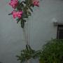 Yard_pics_08_26_14_9_