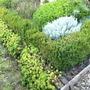 greens and grey