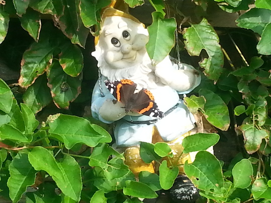 Red Admiral on my hanging gnome