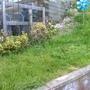 New Grass1