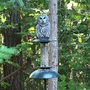 Barred owl (Strix varia) on bird feeder watching for her meal.