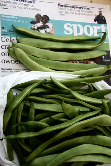 Late Bean Crop