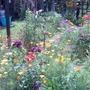 Last summers plants