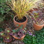 Front garden pots