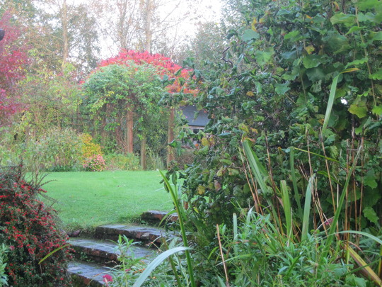 Our garden in the autumn rain - October '14