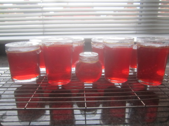 Crab apple jelly made... (Malus x zumi (Crab apple))
