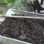 I am so pleased with this years compost - 5 loads from one bin.