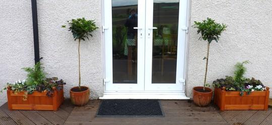 New standard Viburnum Tinus for back door. (Viburnum tinus (Laurustinus))