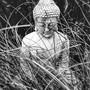 Buddha and black bamboo... (Phyllostachys nigra (Black bamboo))