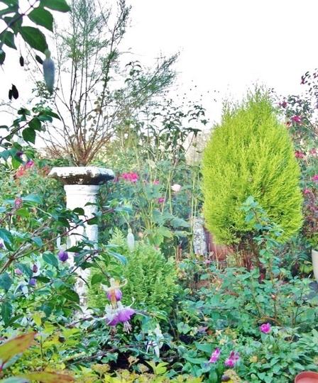A November garden view