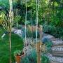 Betula Jacquemontii....garden path. (Betula utilis Jacquemontii Multistem.)