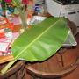 Banana leaf used in dish..