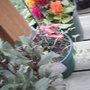 Fuchsia and Celosia