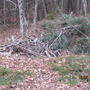 My pile of deadfalls and prunings...
