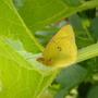 Moth-Butterfly