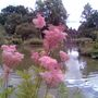 Wisley_lake