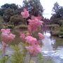 RHS Wisley Lake