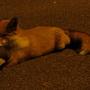 Fox_and_60th_al_003