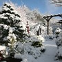 snow in our lower garden