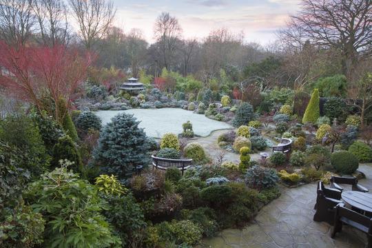 Frost in our upper garden 31 December 2014