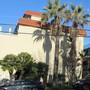 Big palms. (Washingtonia filifera (California Fan Palm))