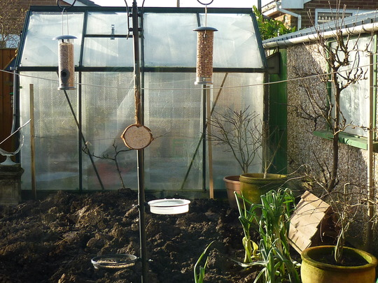 New bird feeder.
