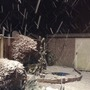 Boxing day night with the large garden lights on, it went from no snow to this in just over an hour.