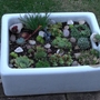 Butlers_sink_planted_with_alpines