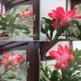 House_plants_jan_15