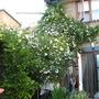 Garden_010