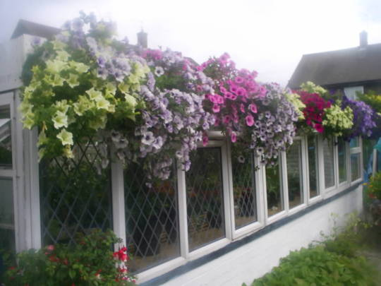 hanging baskets in allotment