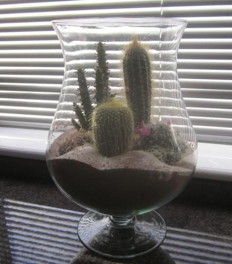 Cacti arrangement.