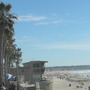 Mexican Fan Palms and the calm before the storm of people at Pacific Beach (Washingtonia robusta (Mexican Fan Palm))