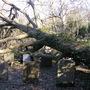 Any body got a pruning saw ?