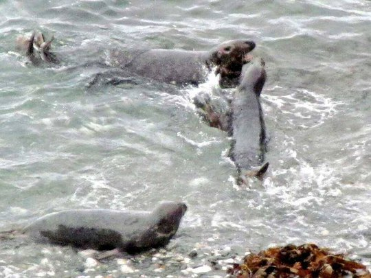 seal cubs and mum last year