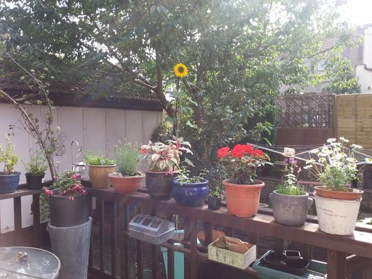 NNew decking shelf, handmade by ohf (out of reach pots/dog)