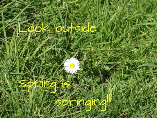 spring is springing!!