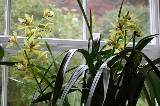 Orchid (Orchid)