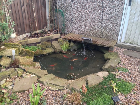 Pond area.
