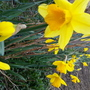 Signs of spring at the Allotment.