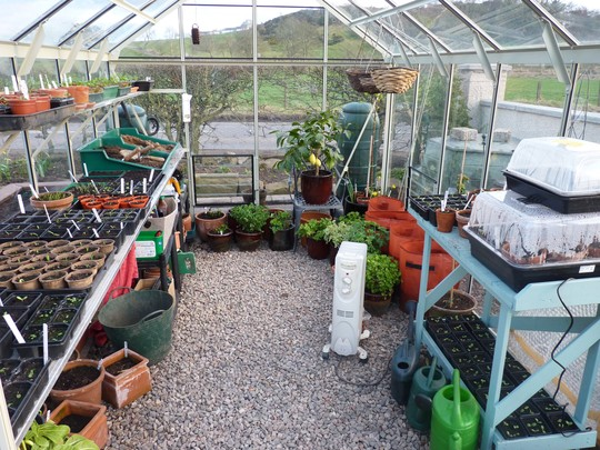 Inside my Greenhouse today...