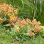 Gone wild primrose!