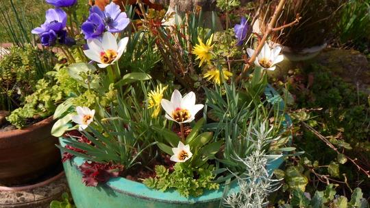 Spring Pot