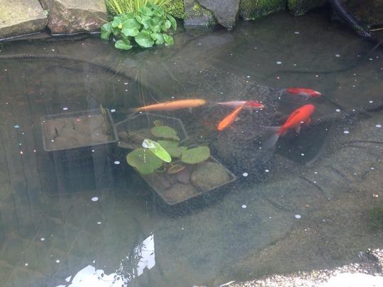 The fish!